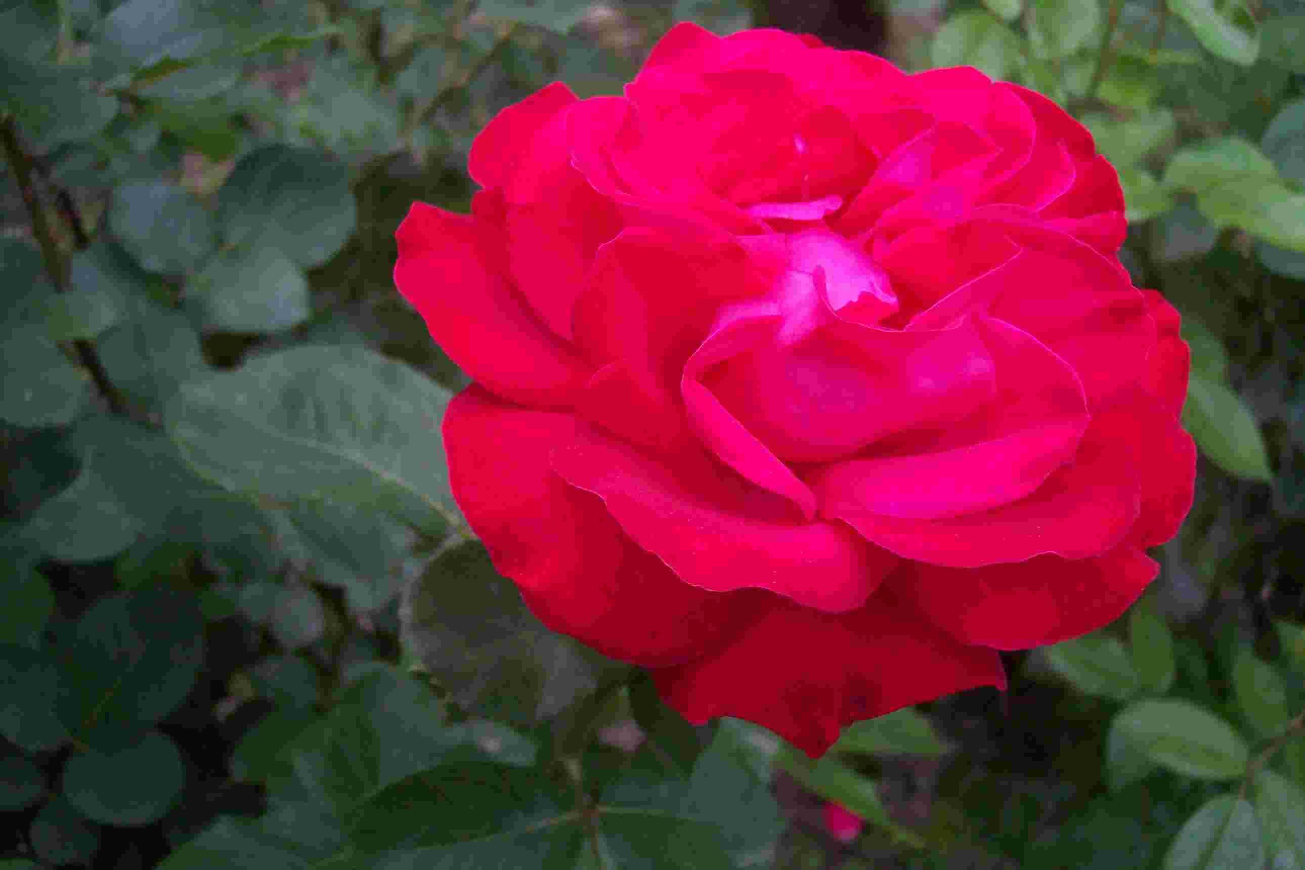 credence rose fushia ~ meilleures images d'inspiration pour votre